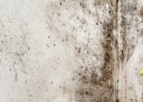 Mold Removal Small