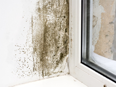 mold removal fleetwood
