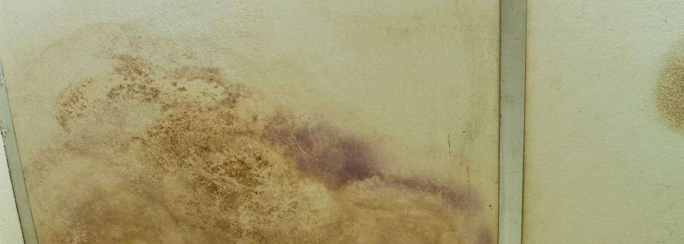 mold damage cleanup fleetwood