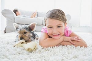 carpet cleaning mohnton