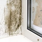mold removal berks county, mold damage berks county