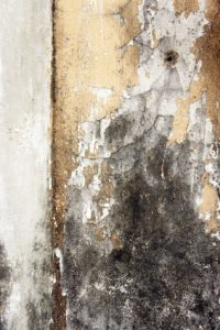 mold damage wyomissing, mold removal wyomissing
