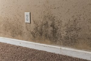 mold damage mohnton, mold damage cleanup mohnton