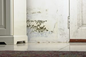 mold removal wyomissing, mold cleanup wyomissing, professional mold removal wyomissing