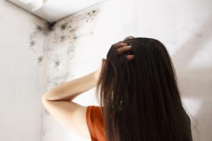 mold damage berks county, mold removal berks county, mold remediation berks county