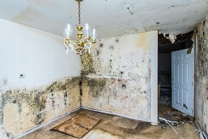 mold cleanup berks county, mold removal berks county