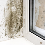 professional mold removal berks county, professional mold remediation berks county, mold damage cleanup berks county