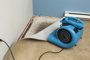 commercial mold remediation sinking spring, commercial mold removal sinking spring, commercial mold cleanup sinking spring
