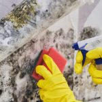 commercial mold remediation berks county, commercial mold removal berks county, commercial mold cleanup berks county