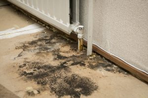 mold removal berks county, mold remediation berks county, mold removal service berks county